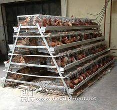 Factory 5000 chicken chicks for sale/battery layer broiler chicken cage Cheap Chicken Coops, Chicken Barn, Portable Chicken Coop, Chicken Cages, Chicken Chick, Poultry Cage, Poultry House, Poultry Farming, Chicken Shelter