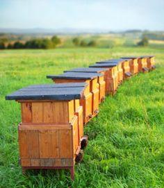 Envie de produire votre propre miel, d'avoir de belles fleurs et aussi de sauver une espèce animale menacée ? Installez plusieurs ruches dans votre jardin. Nos conseils pour être un bon apiculteur.