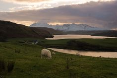 "rockingshelf: ""Landlife on the Ilse of Skye """