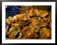 #MUSHROOMS AT MARKET, AVIGNON, PROVENCE, FRANCE