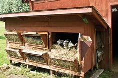 Food Source :) Domestic rabbits are an easy-to-raise, reliable meat animal that's ready for table use in about 90 days.