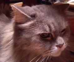 愛猫さくら姫 SHOOP+FACTORY(シュープ・ファクトリー)@オーナーブログ-146ページ目