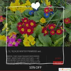 10% OFF on select products. Hurry, sale ending soon! Check out our discounted products now: https://orangetwig.com/shops/AAB5v98/campaigns/AACLECQ?cb=2016003&sn=RetroDIYandPlants&ch=pin&crid=AACLECH.