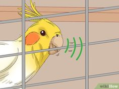 How to Understand Cockatiel Gestures (with Pictures) - wikiHow Diy Cockatiel Toys, Cockatiel Care, Diy Bird Toys, Funny Parrots, You Mad, Budgies, Parakeet, Funny Animal Videos, Pet Birds