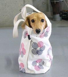 Dog inside a bag