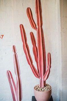 Pink cacti.