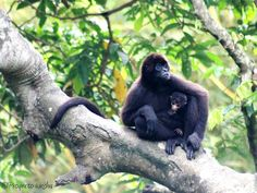 Monkey Victims of Illegal Trafficking on Their Way to Rainforest Freedom