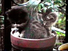 cats are playing in your flower pot