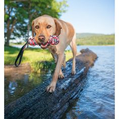 EzyDog Australia - Beaver Tails, $18.95 (http://ezydog.com.au/beaver-tails/)
