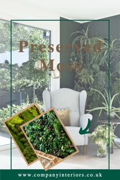The Pre-made Flat Moss Panels are ready to use in your decor design either for your moss wall or a moss frame. They are pre-glued onto a 5mm mdf backing so can be bonded onto a surface or mechanically fixed with small screws through the front onto a hard backing or surface.They require NO Maintenance, watering or day-light, as they are made from preserved moss which is stabilized and will last at least 10 years.#mossframes #mossart #moss #mosspictureframes #mossdesigns #preserved moss Money Tree Bonsai, Board Rooms, Moss Letters, Moss Decor, Ivy Wall, Washroom Design, Moss Wreath, Moss Art, Moss Garden