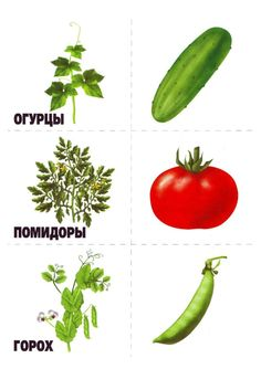 memory12 Numbers Preschool, Preschool Activities, Vegetable Crafts, Learn Russian, Russian Language, Montessori Materials, Group Meals, Fruits And Vegetables, Trees To Plant