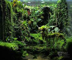 Discover recipes, home ideas, style inspiration and other ideas to try. Planted Aquarium, Aquarium Aquascape, Aquarium Landscape, Nature Aquarium, Aquarium Fish Tank, Terrariums Diy, Gecko Terrarium, Orchid Terrarium, Terrarium Reptile