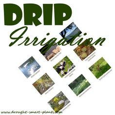 Drip Irrigation Systems - water conservation tips