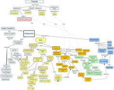 Concept Map integumentary | If you need help turning JavaScript On, click here.