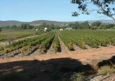 bonnievale - Google Search Vineyard, Cape, Google Search, Outdoor, Beautiful, Mantle, Outdoors, Cabo, Vine Yard