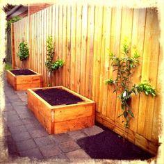 Espalier citrus fence & garden beds  Food garden in small spaces - courtyard garden design