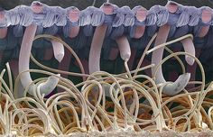 Velcro  Everyday objects that, when they are pictured under an electron microscope, take on a new  life.