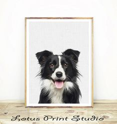 Border Collie Print, Wall Art, Nursery Animal Decor, Dog Photo, Digital Download, Printable Poster, Colour Photo, Farm Sheep Dog, #149