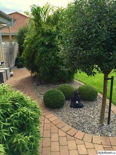 buddha,buxbom,bambu,klotkörsbärsträd