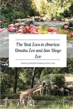 This San Diego boy recently had the privilege of visiting The Omaha Zoo, named by TripAdvisor as the Best Zoo in the US. Being from San Diego, we're pretty prideful of our own World-Famous San Diego Zoo. But which one is better? Family Vacation Destinations, Vacation Resorts, Vacation Trips, Vacation Ideas, Travel Destinations, Family Vacations, Last Minute Vacation Deals, Need A Vacation, Best Zoos In America