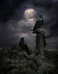 Full moon and raven watch