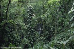 Vida Alta: Chuva na Floresta !