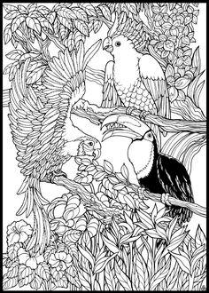 Coloriage d'oiseaux de la jungle.  A vos crayons !