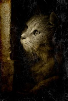 All kittens want to destroy everything they see, and your Christmas tree is even more inviting Pretty Cats, Beautiful Cats, Animals Beautiful, Cute Cats, Cute Animals, Hello Beautiful, Cat Boarding, All About Cats, Jolie Photo