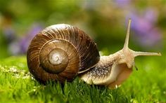 Are you know how long do snails sleep