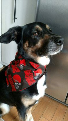 Check out this item in my Etsy shop https://www.etsy.com/listing/472459431/cleveland-browns-dog-bandana-nfl-dog