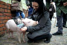 Wybraliśmy się na spacer po warszawskiej Starówce wraz ze Świnka Raćka, która przyjechała tu aż z Gdańska. Przy okazji rozdawaliśmy przechodniom ulotki naszej kampanii www.weganizmteraz.pl, żeby pokazać co można robić, żeby świat był lepszy dla wszystkich świnek.