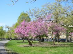 Mcclaren  park ,greenpoint, brooklyn