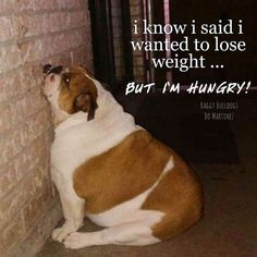 Bulldogs are always hungry!