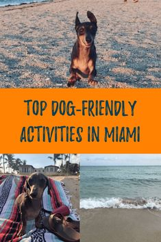 dog training,teach your dog,dog learning,dog tips,dog hacks Florida Travel, Miami Florida, South Florida, The Wild Geese, Where Is Bora Bora, Dog Friendly Hotels, Dog Water Bowls, Camping World