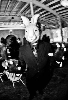 Follow the White Rabbit(s)