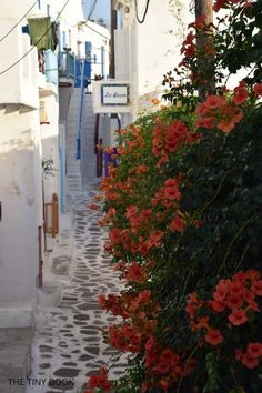 Mykonos for Families: Things to do in Mykonos with kids Mykonos Town, Santorini, Shirley Valentine, Ornos Beach, Stuff To Do, Things To Do, Secluded Beach