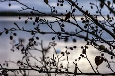Ennen auringon nousua - Mindyjblog