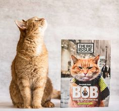 Introducing Bob, The Street Cat Who Turned One Man From Homeless Busker To Best-Selling Author.