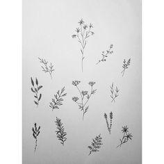 #handpoke #tattoo #sketch plantlove #dotwork #flowers #pointillism #stickandpoke #love #peace #hamburg