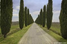beautiful roads in the World - Bing Images The Road, Beautiful Roads, Winding Road, Pathways, Things To Buy, Bing Images, Stairs, Country Roads, Street
