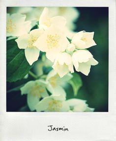jasmin-calendrier-fleurs-mariage-la-mariee-aux-pieds-nus