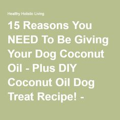 15 Reasons You NEED To Be Giving Your Dog Coconut Oil - Plus DIY Coconut Oil Dog Treat Recipe! - Healthy Holistic Living