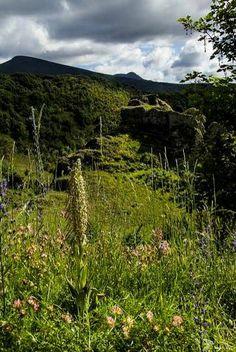 Orquídeas que florecen en los montes de O Courel
