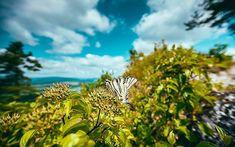 Ať mi nikdo netvrdí že širokáč není univerzální objektiv :D . . . . . . #love #instagood #photooftheday #beautiful #happy #picoftheday #art #instadaily #nature #fun #travel #nofilter #life #beauty #amazing #instagram #photography  #photovoltaic #slovakia #slivensko #butterfly #green #from #ostrava #ostravacity #by #janjasiok