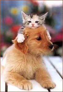 Puppy And Kitten Photo