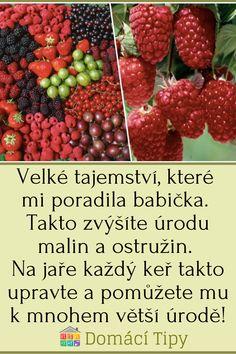 Raspberry, Strawberry, Homemade, Fruit, Gardening, Food, Per Diem, Meal, Home Made