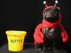 50 frightfully cute Halloween pet costumes