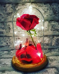These Beauty And The Beast Based Enchanted Rose Domes Are Made To Order Can Be Fully Personalised At No Extra Cost They Come With A Bamboo Base