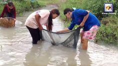 Khmer Cast Net Fishing   Net Fishing in Kampong Cham Province   Beautifu...