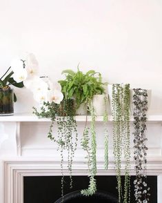 This mantel laden with plants showcases some of our very favorite cascading specimens: string of hearts string of pearls burro's tail and string of buttons (from right to left).